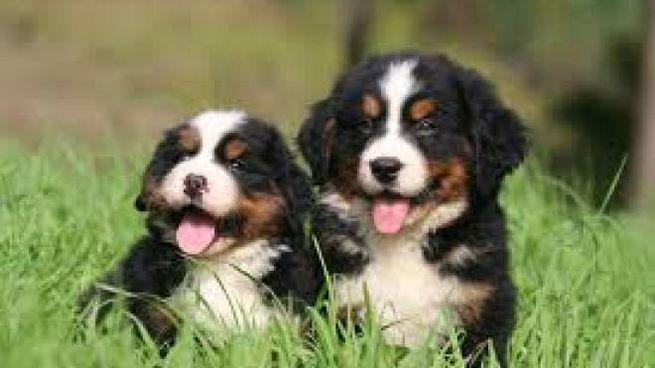 Arriva Natale E Si Moltiplicano Gli Acquisti Di Cuccioli Con