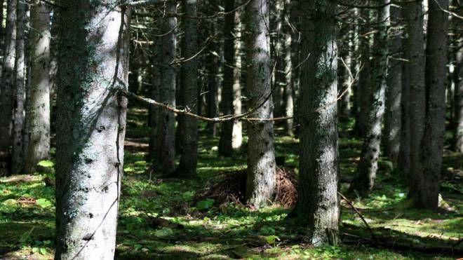 Un bosco, foto generica (L.Gallitto)