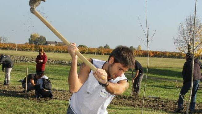 I grillini piantano gli alberi