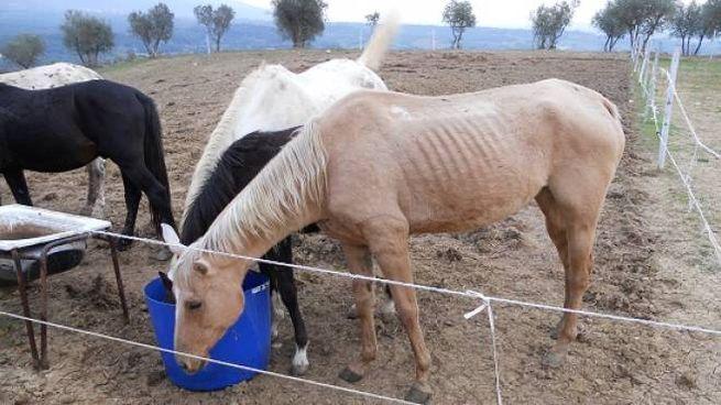 Cavalli(repertorio)