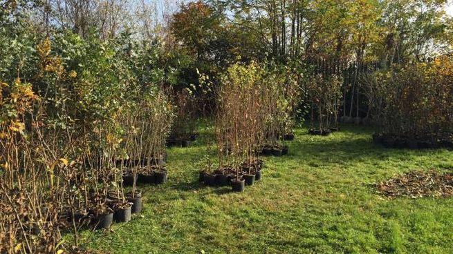 Piantumazione alberi dopo Expo