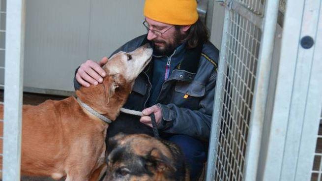 Il Volontario Al Canile E Gli Amici Animali Non Sono Un Gioco