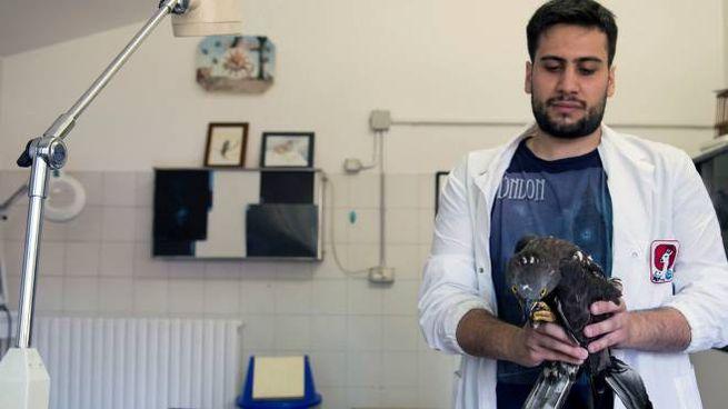 I veterinari al lavoro