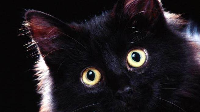 17 Novembre La Giornata Del Gatto Nero Cultura Lanazioneit