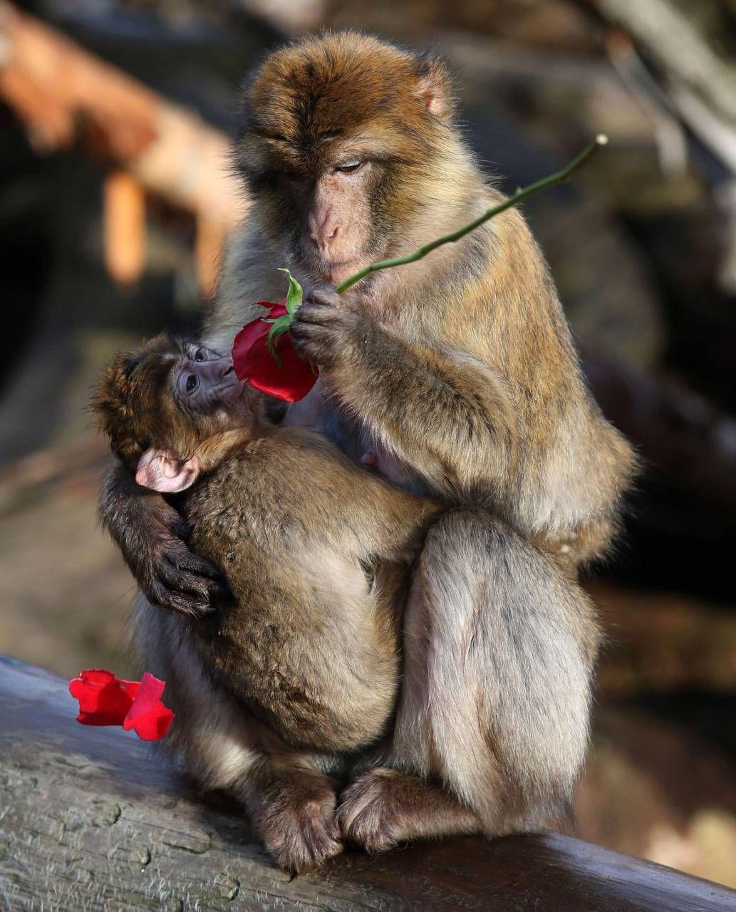 Festa Di San Valentino Le Frasi D Amore Più Romantiche Tra Film E