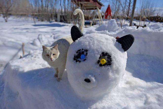 Il Gatto E La Neve Quanto Sono Belli I Giochi Con I Bambini