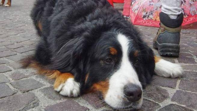 Vende Online Cucciolo Di Cane Denunciata Una 34enne Provincia