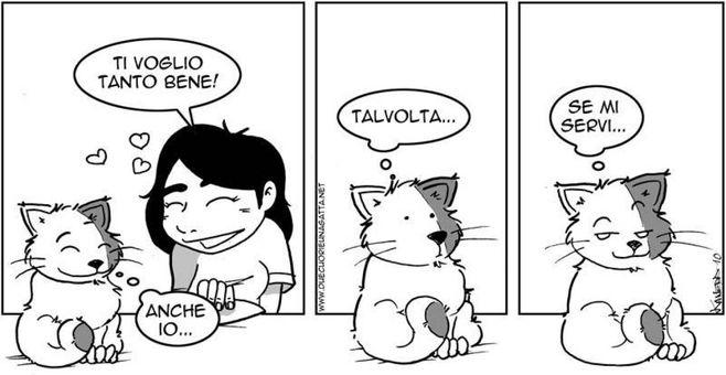 Festa Del Gatto 10 Vignette D Autore In Onore Dei Piccoli Felini