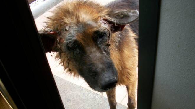 Un cane abbandonato