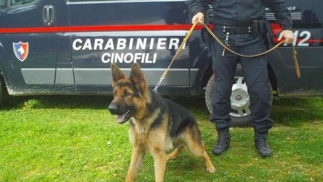 Cane carabiniere