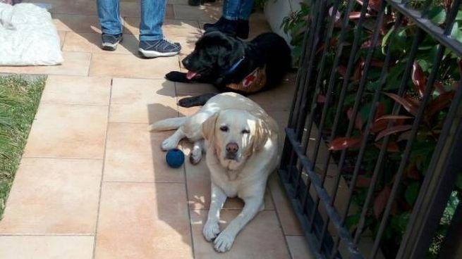 Spritz e Penelope insieme in una foto Ansa