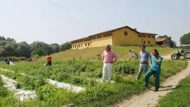 Un campo coltivato a biologico