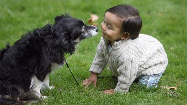 Cane con bimbo in una foto di repertorio (AP)
