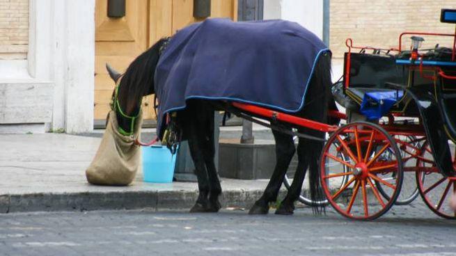 Cavallo delle botticelle in una foto L.Gallitto