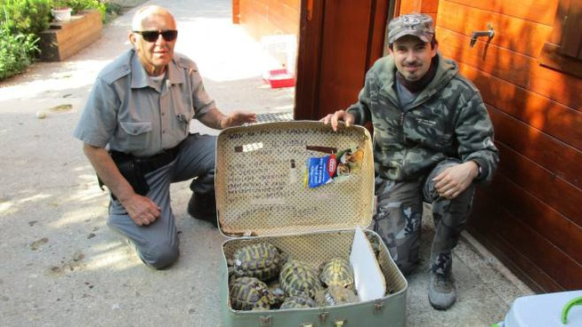 Le guardie ecologiche di Legambiente con la valigia piena di tartarughe recuperata stamattina