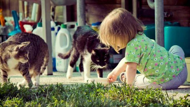 Open Day Al Gattile Giochi E Animazioni Con I Mici Animali