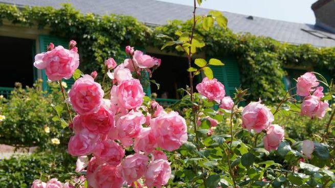 Il giardino di Monet a Giverny e, dietro, la casa del pittore
