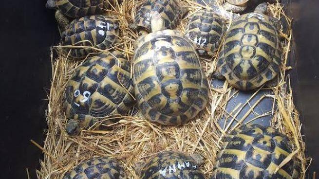 Le tartarughe abbandonate