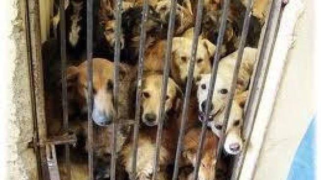 Cani stipati in un box