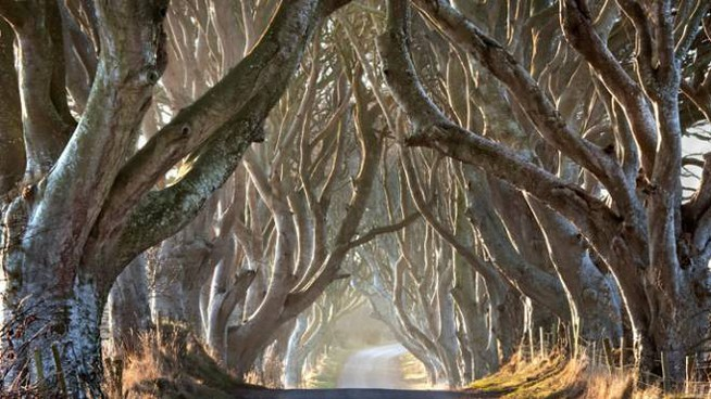 La foresta di Dark Hedges, in Irlanda del Nord - Foto Stephen Emerson/Alamy