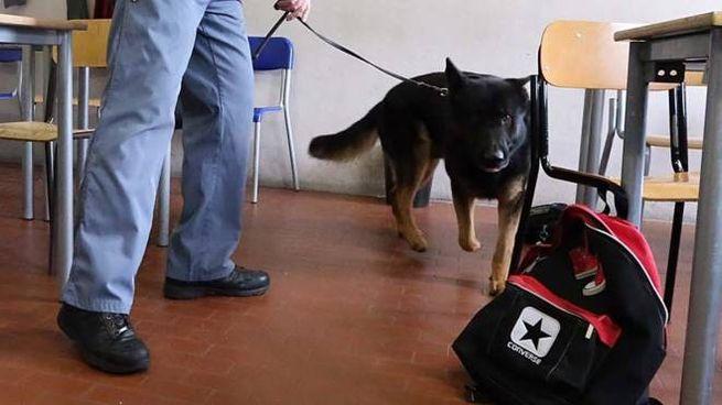 Un poliziotto col cane antidroga