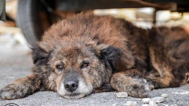 Cani abbandonati (foto di repertorio)