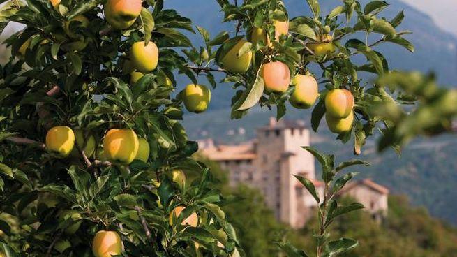 Festa delle mele in Val di Non