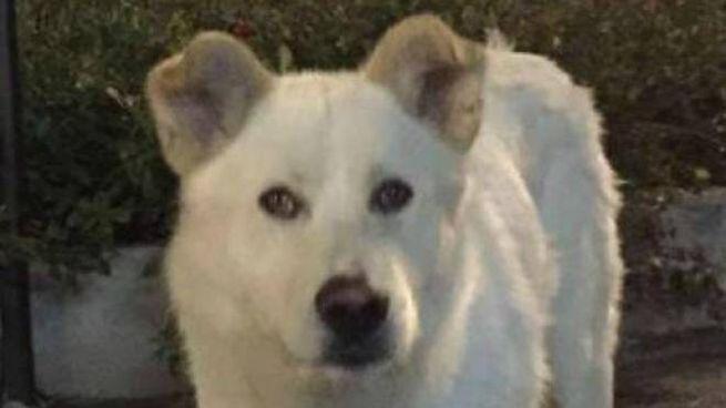 Il cane Angelo massacrato a Sangineto