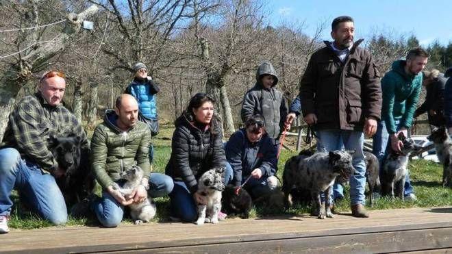 Cani delle Alpi Apuane insieme ai loro padroni