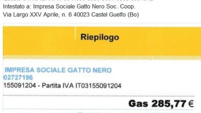 Imola Bolletta Troppo Cara Il Gattile Lancia La Colletta Social