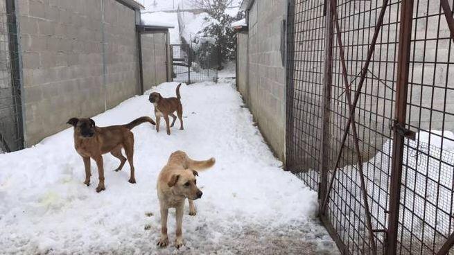 I cani di Campobasso sommersi dalla neve