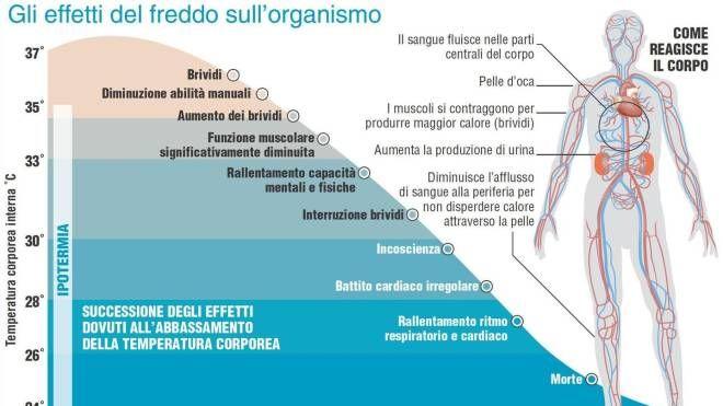 Grafico: gli effetti del freddo sull'organismo (Ansa)