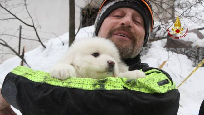 Uno dei cuccioli trovati vivi nell'hotel Rigopiano (Afp)