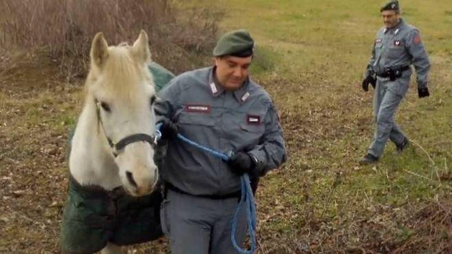 I Carabinieri forestali portano in salvo dei cavalli