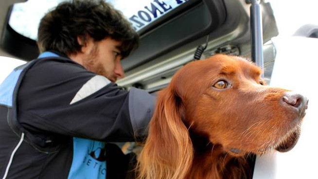 Cani E Gatti Scomparsi Non Sono Più Un Problema Ci Pensa Pet
