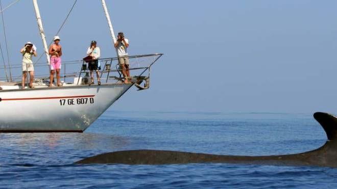 Esploratori al lavoro sulla nave Tethys