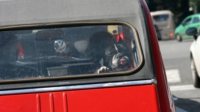 Cane in auto in una foto L.Gallitto