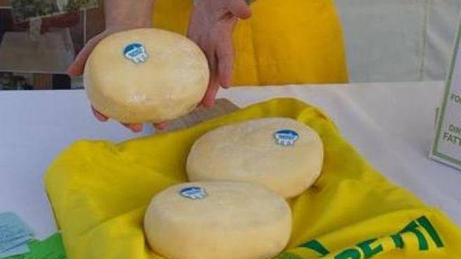 Il formaggio Appena Munto