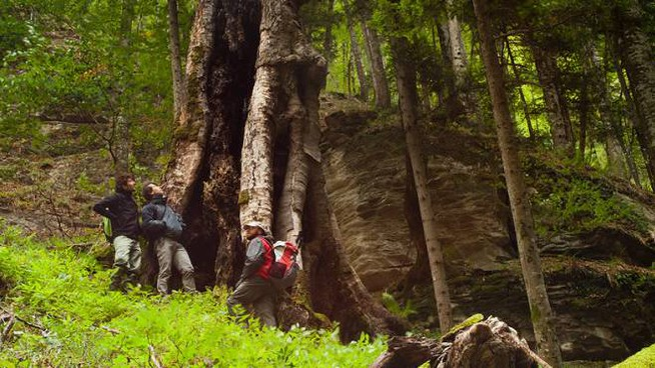 Il bosco all'interno del parco (foto Bandini)