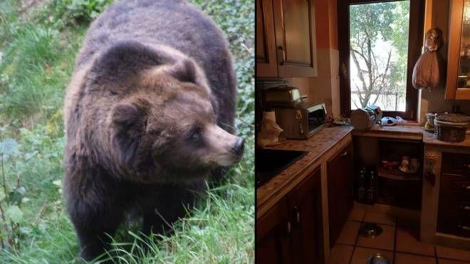 Combo: un orso bruno e, a destra, la casa visitata da Mario