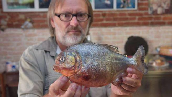 Vitaliano Daolio mostra il piranha ripescato dal Po