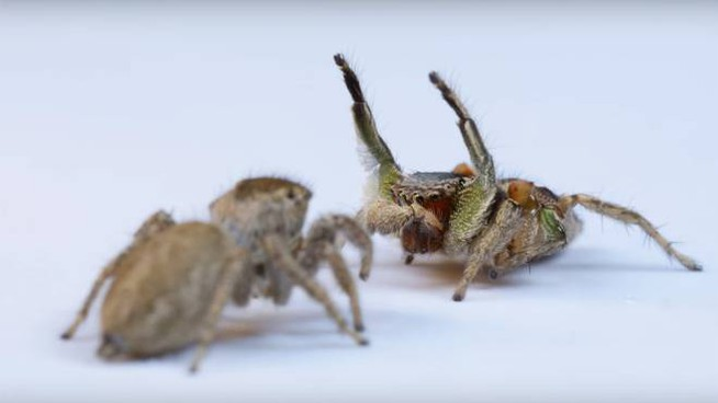 La danza del ragno (Foto: Daniel Zurek)