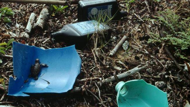Plastica sulla spiaggia in una foto Rath per WWF