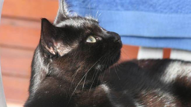 Venerdì 17 Novembre Contro Le Superstizioni Viva Il Gatto Nero