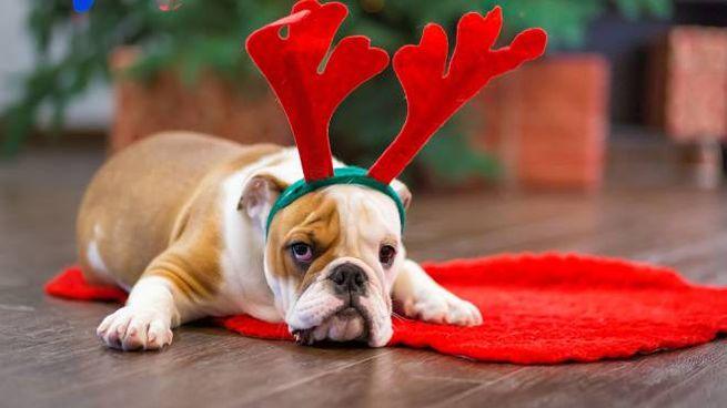 Frasi Auguri Natale Zii.Buone Feste Di Natale Le Frasi Di Auguri Piu Dolci E Divertenti
