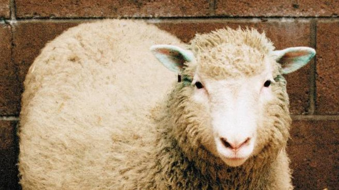 La pecora Dolly (Ansa)