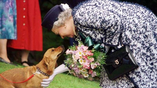 La regina Elisabetta con uno dei suoi cani