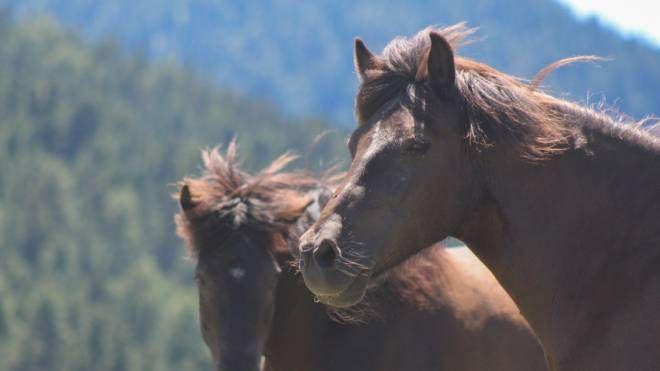 Cavalli in una foto L.Gallitto (Repertorio)