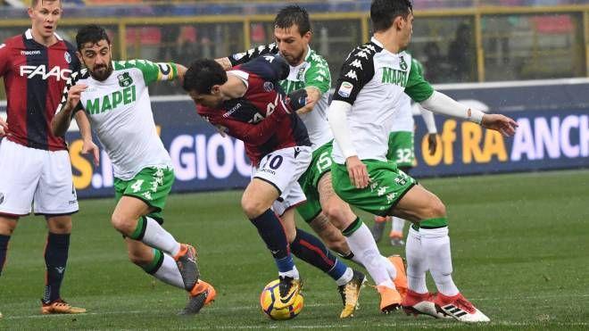 Bologna-Sassuolo 2-1 (FotoSchicchi)