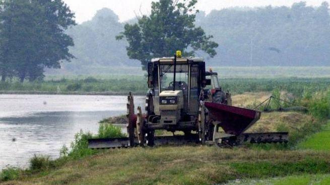 Crescono le esportazioni del riso